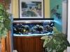 aquariums-1b