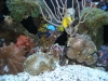 aquariums-2