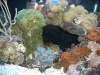 aquariums-3