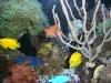 aquariums-5