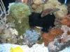 aquariums-6