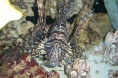 Saltwater Aquarium
