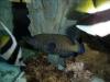 aquariums-12