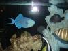 aquariums-13