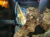 aquariums-9